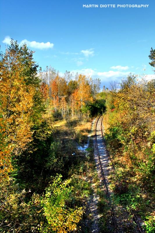 Wild Tracks