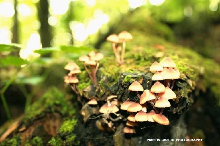 Mushroom Condos...