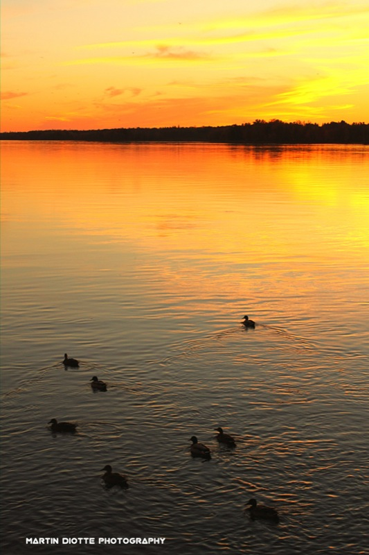 Sunset Ducks