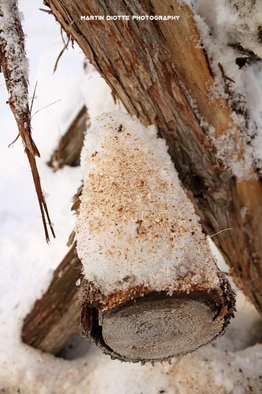 Snowing Wood