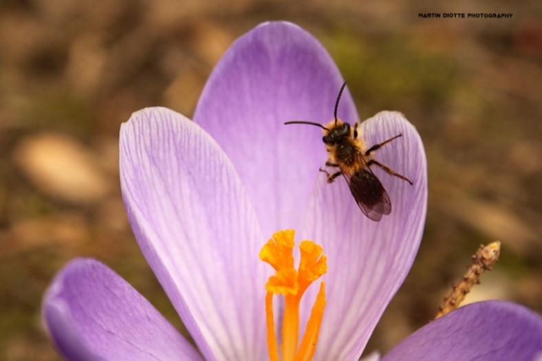 Pollen Pick-Up