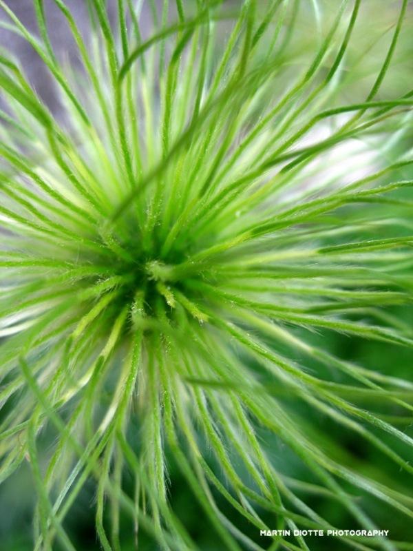 Greenish Hairs