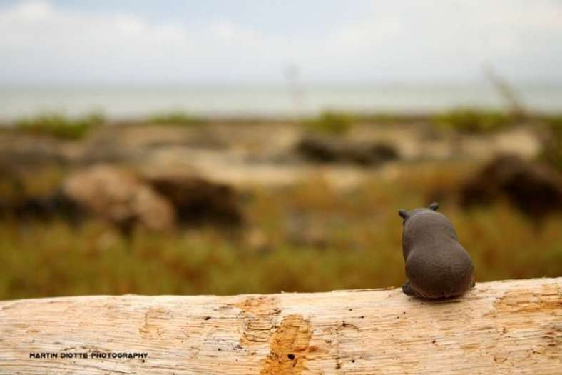 Lonely Hippo
