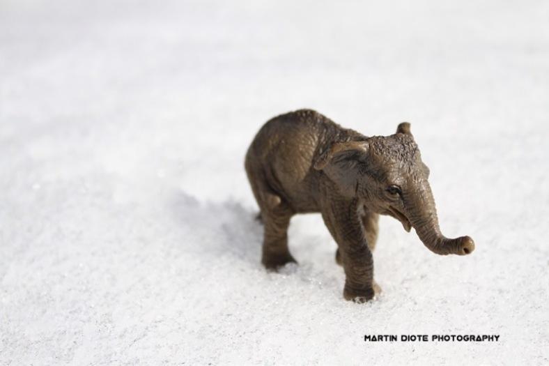 Snow Elephants